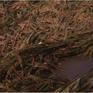 Hậu Giang: Nhiều diện tích lúa bị đổ gây khó khăn trong thu hoạch