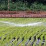 Thái Lan trả tiền để nông dân ngưng trồng lúa
