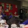Australia giúp học sinh chống trầm cảm bằng mèo