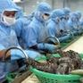 Lập khu nông nghiệp công nghệ cao ngành tôm