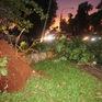 Cây cổ thụ bật gốc đổ đè trúng ô tô, 2 người thoát chết trong gang tấc
