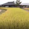 Ngành nông nghiệp Fukushima phục hồi sau sự cố rò rỉ phóng xạ