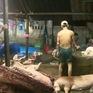 Nha Trang tăng cường kiểm soát cơ sở giết mổ gia súc, gia cầm
