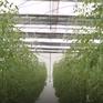 Quy hoạch cây trồng trên đất lúa kém hiệu quả - Hướng đi mới cho người nông dân