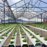 NHNN hướng dẫn gói 100.000 tỷ đồng cho vay nông nghiệp công nghệ cao