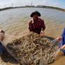 Bạc Liêu phát triển nuôi trồng thủy sản theo hướng liên kết