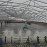Sản lượng tôm của Kiên Giang vượt mức 63.000 tấn