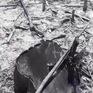 Thanh Hóa: Hàng nghìn ha rừng tái sinh tự nhiên có nguy cơ bị xóa sổ