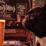 Fox & Hounds - Quán rượu thân thiện với chó nhất nước Anh