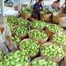 4 tháng, xuất khẩu rau quả đạt 1 tỷ USD