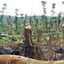 Nhiều hạn chế trong thu hồi đất để trồng lại rừng tại Đăk Lăk
