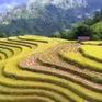 Vẻ đẹp hoang sơ, hùng vĩ của ruộng bậc thang Hoàng Su Phì