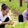 Nâng cao ý thức sản xuất an toàn cho nông dân