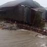 Kiên Giang mất 600ha rừng phòng hộ do sạt lở