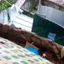 Sạt lở gây sập nhà ở Đà Lạt, cụ ông 81 tuổi bị thương nặng
