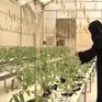 Tầm nhìn nông nghiệp bền vững trên sa mạc