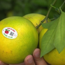 Bắc Giang gắn tem truy xuất nguồn gốc cây ăn quả