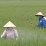Hình thành và phát triển dịch vụ bảo vệ thực vật