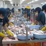 Cá tra Việt Nam vào châu Âu tuân thủ tiêu chuẩn vệ sinh nghiêm ngặt