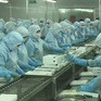 Xuất khẩu tôm sang châu Âu tăng mạnh