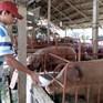 """Nhiều doanh nghiệp đánh tiếng """"giải cứu"""" người chăn nuôi lợn"""