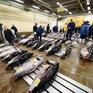 Chợ cá Tsukiji - Ký ức thế kỷ của những thế hệ người dân Tokyo