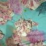 Cậu bé Trung Quốc xé vụn tập tiền 50.000 NDT của bố