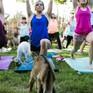 Tập yoga với... dê - Cách rèn luyện sức khỏe mới tại Mỹ