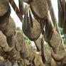 Khám phá ẩm thực phố cổ Thông Huề, Cao Bằng