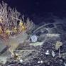 Tháng 12/2018, chính thức khởi động dự án khám phá bí ẩn 5 đáy đại dương