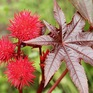 7 loại cây cảnh đẹp nhưng chứa độc tố mà bạn nên tránh xa