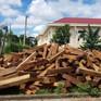 Truy quét nhiều điểm khai thác, tập kết gỗ lậu lớn