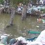 Cà Mau: Kiến nghị đóng cửa 2 bãi rác nằm trong rừng phòng hộ