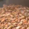 Việt Nam sở hữu hơn 1 triệu tấn/năm nguồn phụ phẩm thủy hải sản