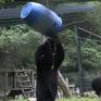 Đón ngày mới tại Trung tâm cứu hộ gấu Việt Nam