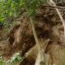 Núi Thiên Văn và hiểm họa sạt lở, đe dọa tính mạng người dân