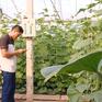 Nông dân hướng đến sản xuất hiện đại