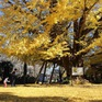 Những địa điểm ngắm lá vàng lá đỏ nổi tiếng nhất nước Nhật