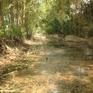 Hải Dương: Trại lợn xả thải ra ra môi trường, kênh tưới tiêu ô nhiễm nghiêm trọng