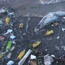 Ô nhiễm rác thải nhựa đại dương ngày càng nghiêm trọng