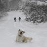 Bão tuyết mạnh tràn qua, bờ Đông nước Mỹ tê liệt