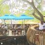 Độc đáo mô hình kinh doanh cà phê sân vườn