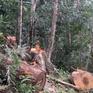 Kiên quyết xử lý tập thể, cá nhân liên quan đến vụ phá rừng ở Kon Tum