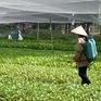 Báo động tình trạng lạm dụng thuốc bảo vệ thực vật ở Việt Nam