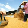 Việt Nam chính thức có thương hiệu gạo quốc gia