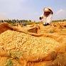 Khai mạc Festival Lúa gạo Việt Nam lần thứ 3
