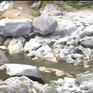 Nhiều hồ thủy điện thiếu nước