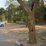 Biến cây chết thành tác phẩm nghệ thuật