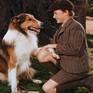 Những bộ phim cảm động về loài chó