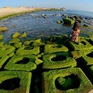Độc đáo những phiến đá rêu xanh tại Phú Yên
